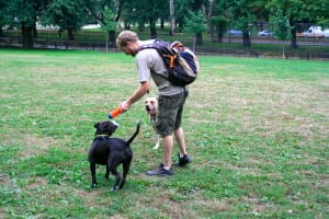 Three Reasons Why Your Dogwalker is Probably is Richer than Most New PhDs